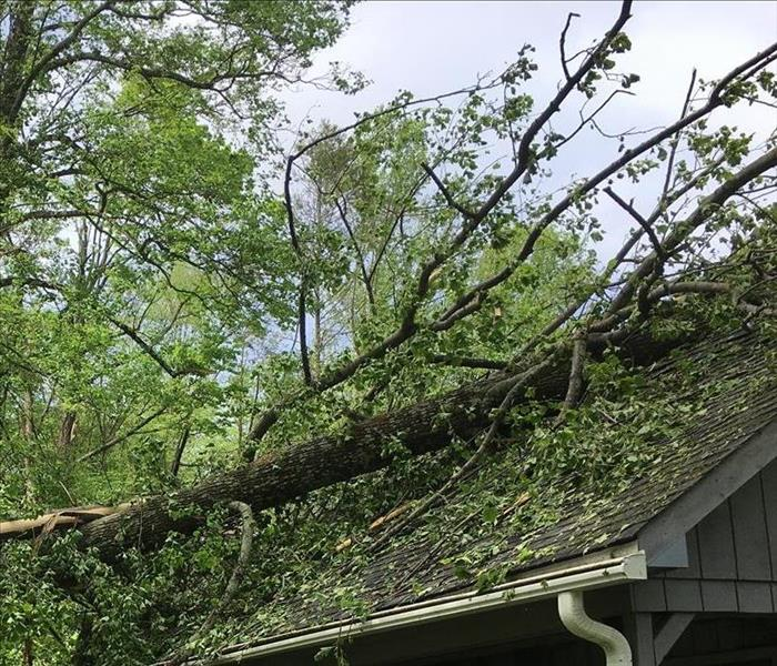 roof of a house with a tree that fell on it