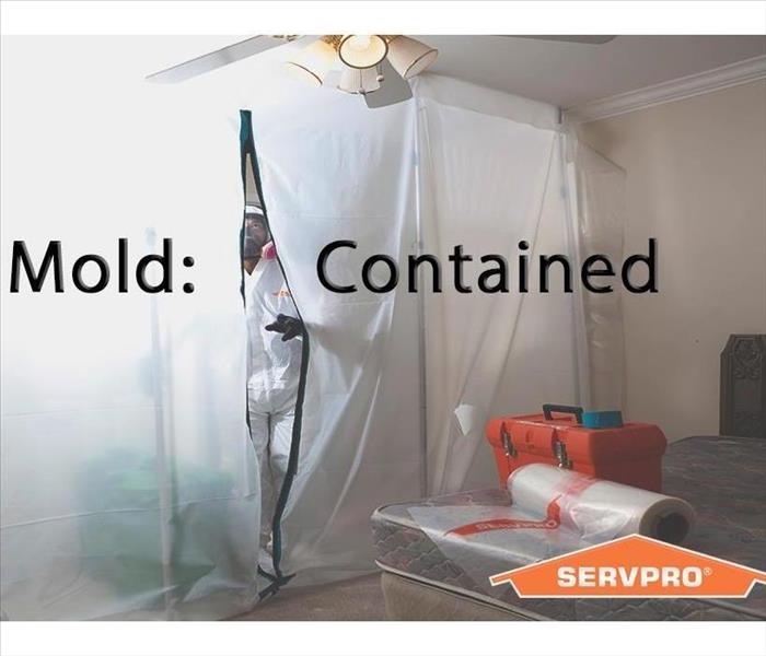 Mold Remediation The Mold Remediation Process Shouldn't be a Nightmare!