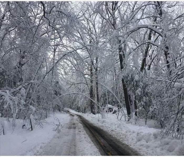 road with ice covered tree limbs and telephone wires